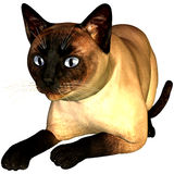 Siam cat. 3d rendering a lying Siam cat as illustration Royalty Free Stock Image