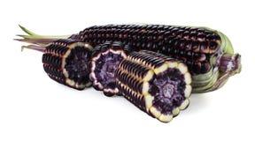 Siam Rubinowa królowa jest super słodkim kukurudzą z czerwonym kolorem, może być jedząca świeża, odosobniony na białym tle z ścin fotografia stock