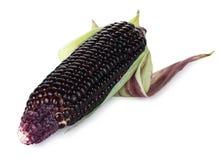 Siam Rubinowa królowa jest super słodkim kukurudzą z czerwonym kolorem, może być jedząca świeża, odosobniony na białym tle z ścin zdjęcie stock