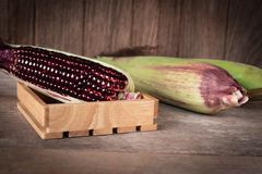 Siam Ruby Queen é milho doce super com cor vermelha, pode ser lugar fresco comido para arranjar e colocar no fundo de madeira da  fotografia de stock royalty free
