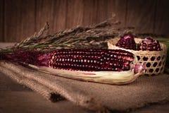 Siam Ruby Queen é milho doce super com cor vermelha, pode ser lugar fresco comido para arranjar e colocar no saco e no fundo de m imagens de stock