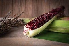 Siam Ruby Queen es maíz dulce estupendo con color rojo, puede ser coincidencia del lugar y lugar frescos comidos en la hoja del p fotografía de archivo