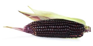 Siam Ruby Queen is super sweet corn with red color, can be eaten fresh, isolated on a white background with clipping path stock photos
