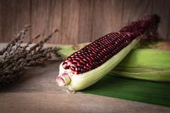 Siam Ruby Queen is super sweet corn with red color, can be eaten fresh place overlap and place on banana leaf and wood table stock photography