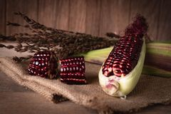 Siam Ruby Queen is super sweet corn with red color, can be eaten fresh place overlap and place on sack and wood table background, royalty free stock photos