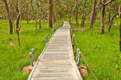 Siam tulip. And bridge at Chaiyaphum Province, Thailand stock photos