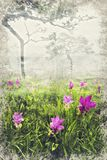 Siam Tulip Field in nevelige ochtend, Thailand Digitaal Art Impasto royalty-vrije stock afbeeldingen