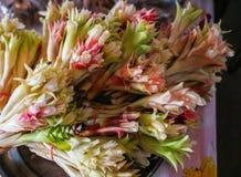 Siam Tulip fiorisce il nome scientifico: Sessilis della curcuma immagini stock