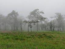 Siam Tulip Park imagem de stock
