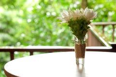 Siam Tulipanowi biali kwiaty w szkle Fotografia Royalty Free