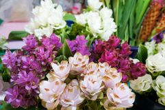 Siam tulips with difference colors. In the Thailand local market stock image