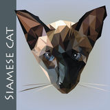 siames γάτα Στοκ φωτογραφίες με δικαίωμα ελεύθερης χρήσης