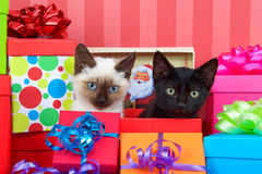 Siamese and black kittens in christmas presents royalty free stock photos