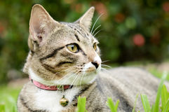 Siamese cat, beautiful and cute cat of Thailand Stock Photo