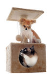 Siamese cat and chihuahua Royalty Free Stock Image