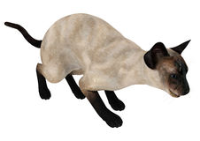 Siamese Cat Royalty Free Stock Image