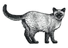 Siamese cat illustration, drawing, engraving, line art Royalty Free Stock Photo