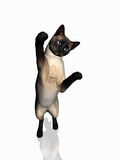 Siamese cat jumping. Stock Photography