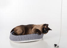 Siamese Cat lying in the handmade basket and playing with rope and mouse. White background Royalty Free Stock Photo