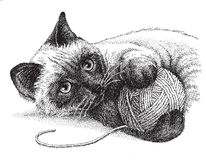 Siamese Cat Playing. A siamese cat enjoys playing with a ball of yarn -  version of my pen & ink drawing Stock Photos