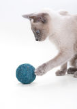 Siamese Cat Playing with Ball. At the white background Royalty Free Stock Images