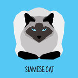 Siamese cat portrait. Royalty Free Stock Photography