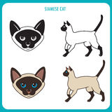Siamese Cat Set. Face And Body. Vector On A White Background. Siamese Cat Vector Illustration. Royalty Free Stock Photos