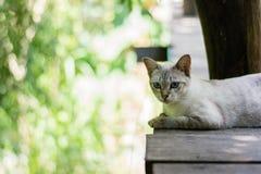 Siamese cat sitting on bridge Stock Photo