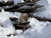 Homeless cat and heap of wooden planks stock photos