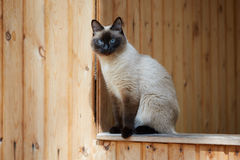Siamese cat sitting on the railing of a wooden house Stock Photo
