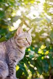 Siamese cat squinting at people. Siamese cat in garden squinting at people Stock Image
