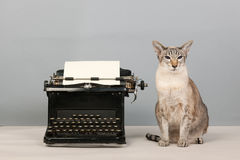 Siamese cat and type writer. Siamese cat and vintage black old typewriter Royalty Free Stock Images