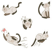 Siamese cat in action. Siamese cat in various action, create by vector Stock Photography