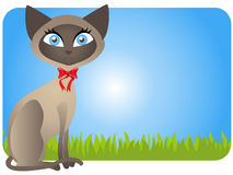 Siamese cat vector Stock Image