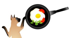 Siamese cat wants to eat the fried eggs. From a frying pan Royalty Free Stock Image