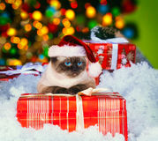 Siamese cat wearing Santa hat Royalty Free Stock Images