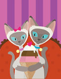 Siamese Cats Ice Cream Royalty Free Stock Photography