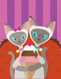 Siamese Cats Ice Cream Royalty Free Stock Photography