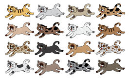 Siamese cats Stock Image