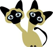 Siamese Cats Royalty Free Stock Images