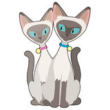 Siamese Cats Stock Images