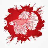 Siamese fighter fish. Designed on splatter blood background graphic vector Stock Photo
