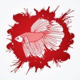 Siamese fighter fish Stock Photo