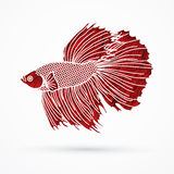 Siamese fighter fish Royalty Free Stock Images