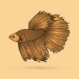 Siamese fighter fish. Gold Siamese fighter fish graphic vector Stock Photo