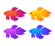Siamese fighting fish. Betta Splendens of different colors, isolated vector illustration Royalty Free Stock Photography