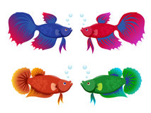 Siamese fighting fishes set Royalty Free Stock Images