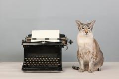 Siamese kat en typeschrijver Royalty-vrije Stock Afbeeldingen