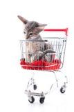 Siamese katje in boodschappenwagentje Stock Afbeeldingen