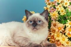 Siamese katje die dichtbij bloemen liggen royalty-vrije stock foto